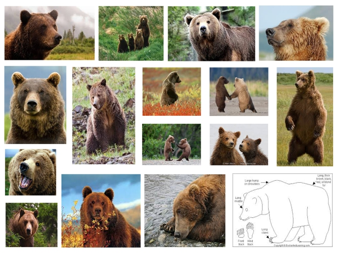 Logo Study: Bears. Source: Google Images